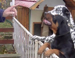 Brave Hunde mag die FIDESZ