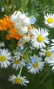 8. kép A Gyöngyvirág virágját minden gyerek ismeri, gyakran anyáknapi csokrok része