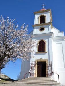 Mandulafa a templom előtt