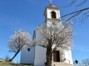 Két mandulafa a templom előtt