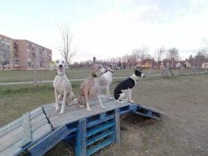 Agar und Hirtenhund im Hundeauslauf von Pécs-Gartenstadt